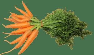 La pratique des indices glycémiques LES CAROTTES dans l'alimentation à indice glycémique, Les carottes dans l'alimentation a indice glycémique, À l'état cru, la carotte n'a qu'un IG de 16, mais lorsqu'elle est cuite et qu'elle devient de consistance molle, elle obtient un IG de 92. La raison est qu'une carotte cuite est plus sucrée que celle qui est crue: la cause est la libération d'amidon.